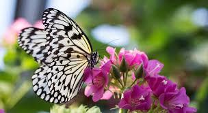 Estudiar a las mariposas